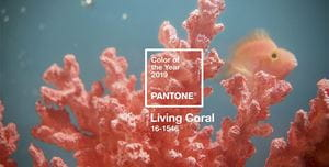 Pantone color of the year 2019 living coral